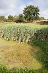 golfplatz-tessin1 (1 von 1)